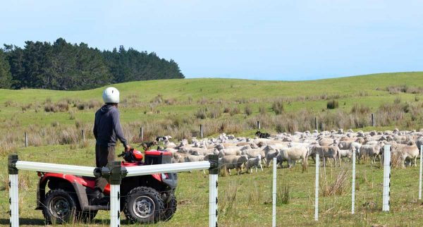 PVC-Post-and-Rail---SheepFence-2-